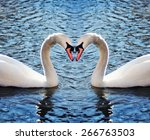 two swans in a blue lake or... | Shutterstock . vector #266763503