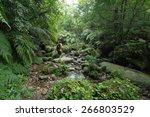 man exploring dense tropical...   Shutterstock . vector #266803529