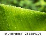 Raindrop On Banana Leaf