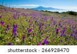 la gomera  flowering mountain... | Shutterstock . vector #266928470
