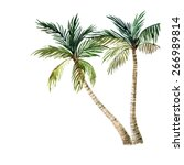 palm tree isolated on white... | Shutterstock . vector #266989814