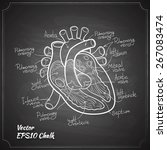 heart anatomy chalk painted on...   Shutterstock .eps vector #267083474