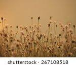 Flower Flower Background.