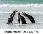 Group Of The Penguins In The...