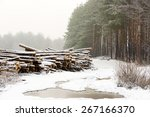 the cut down trees lying... | Shutterstock . vector #267166370