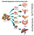explanation of stem cell... | Shutterstock .eps vector #267174020