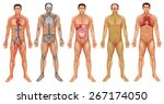 chart of human body system | Shutterstock .eps vector #267174050