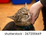 homeless cat at the shelter | Shutterstock . vector #267200669