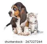 Stock photo kitten and basset hound puppy standing together isolated on white background 267227264