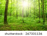 sun beam in a green forest | Shutterstock . vector #267331136