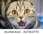 Stock photo funny cat with blurred background 267361970