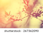 vintage photo of butterfly and... | Shutterstock . vector #267362090