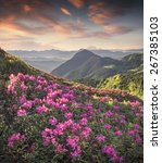magic pink rhododendron flowers ... | Shutterstock . vector #267385103