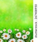 wildflowers daisies | Shutterstock . vector #267408950