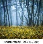 Mysterious Dark Forest In Fog...