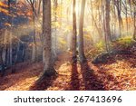 beautiful autumn sunset in the... | Shutterstock . vector #267413696