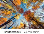 Beautiful Trees Set Against Th...