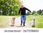 Stock photo man exercising dogs on countryside walk 267558803