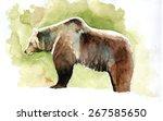 watercolor paint of a bear | Shutterstock . vector #267585650
