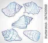 Hand Drawn Seashells  Ink Styl...