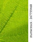 green leaf detail close up... | Shutterstock .eps vector #267755468