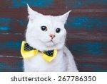 Beautiful Stylish Purebred Cat. ...