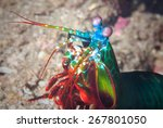 A Mantis Shrimp Lives On A...