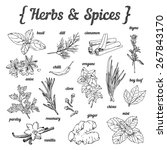 hand sketched herbs and spices... | Shutterstock .eps vector #267843170