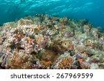 anemone and anemone fish | Shutterstock . vector #267969599