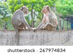 Two Monkeys Sitting On The Wal...