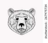 sketch realistic face bear.... | Shutterstock . vector #267975734