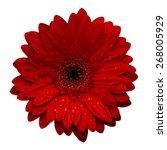 red gerbera with water drops... | Shutterstock . vector #268005929