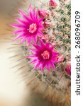 Decorative Cactus With Flowers...