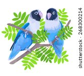 pair of blue masked lovebirds.... | Shutterstock .eps vector #268300214