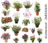 Group Of Flower Plants In Fron...
