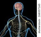 nervous system | Shutterstock . vector #268357160