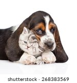 Basset Hound Puppy Embracing...