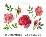 set of red roses isolated on...   Shutterstock .eps vector #268416719