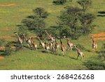 aerial view of a herd of... | Shutterstock . vector #268426268