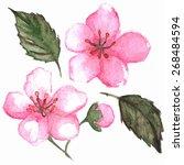 watercolor pink cherry sakura... | Shutterstock .eps vector #268484594