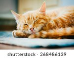 Stock photo peaceful orange tabby male kitten curled up sleeping on floor 268486139