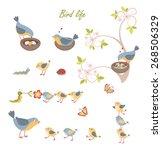 Set Of Funny Cute Birds  Babies ...