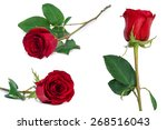 Stock photo red rose set flower close up isolated on white with clipping path included 268516043