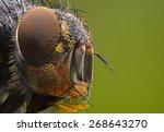 Fly Portrait