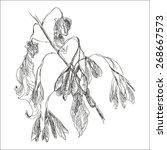 hand drawn maple branch....   Shutterstock .eps vector #268667573