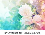 Stock photo flower background with garden of beautiful roses toned picture 268783706