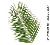 Leaf Of A Date Palm Tree...