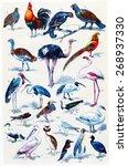 common birds  vintage engraved...   Shutterstock . vector #268937330