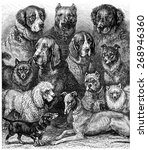 Various Dogs  Vintage Engraved...