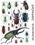 Insects  Beetles And Scarab ...